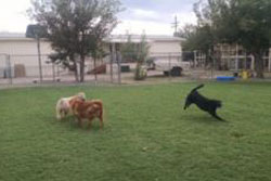 doggy daycare in tucson